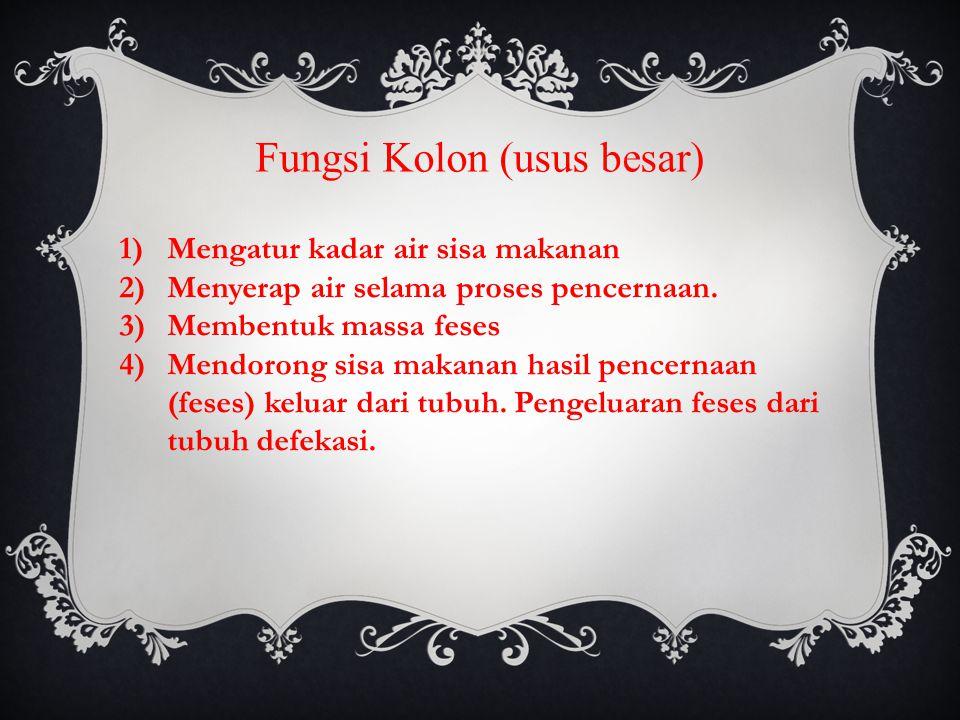 Fungsi Kolon (usus besar) 1)Mengatur kadar air sisa makanan 2)Menyerap air selama proses pencernaan.