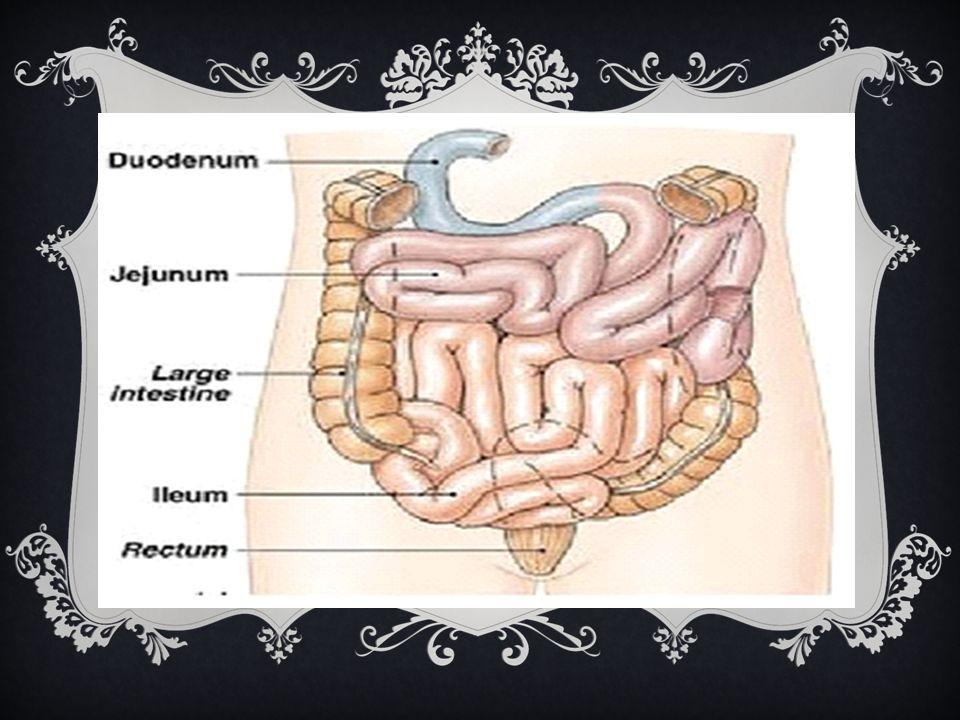 Fungsi Rektum  Menerima feces dari usus besar  Membiarkan seseorang mengetahui ada feces yang harus dikeluarkan  Menahan feces sampai pengeluaran t