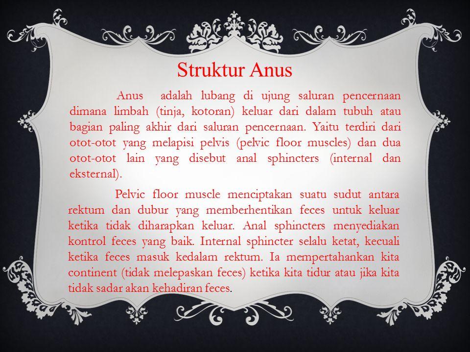 Struktur Anus Anus adalah lubang di ujung saluran pencernaan dimana limbah (tinja, kotoran) keluar dari dalam tubuh atau bagian paling akhir dari saluran pencernaan.