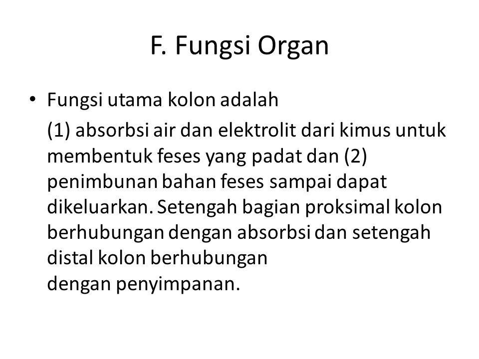 F. Fungsi Organ Fungsi utama kolon adalah (1) absorbsi air dan elektrolit dari kimus untuk membentuk feses yang padat dan (2) penimbunan bahan feses s