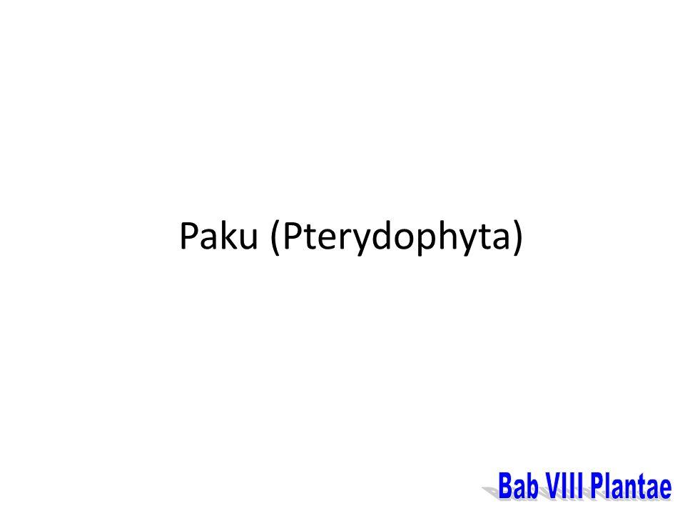 Paku (Pterydophyta)