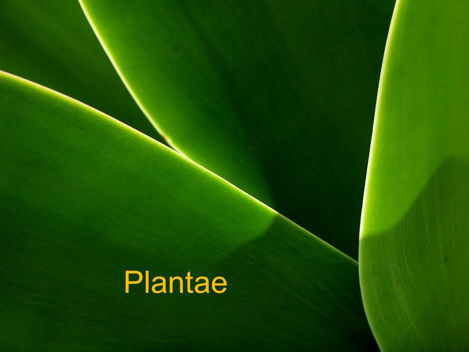 Tujuan Pembelajaran Melalui kegiatan pengamatan, siswa dapat: 1.Mengidentifikasi berbagai tumbuhan berbiji (Spermatophyta).