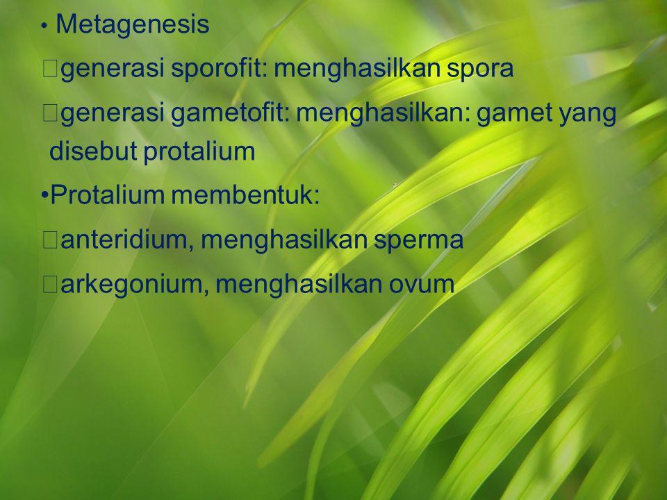Metagenesis  generasi sporofit: menghasilkan spora  generasi gametofit: menghasilkan: gamet yang disebut protalium Protalium membentuk:  anteridium