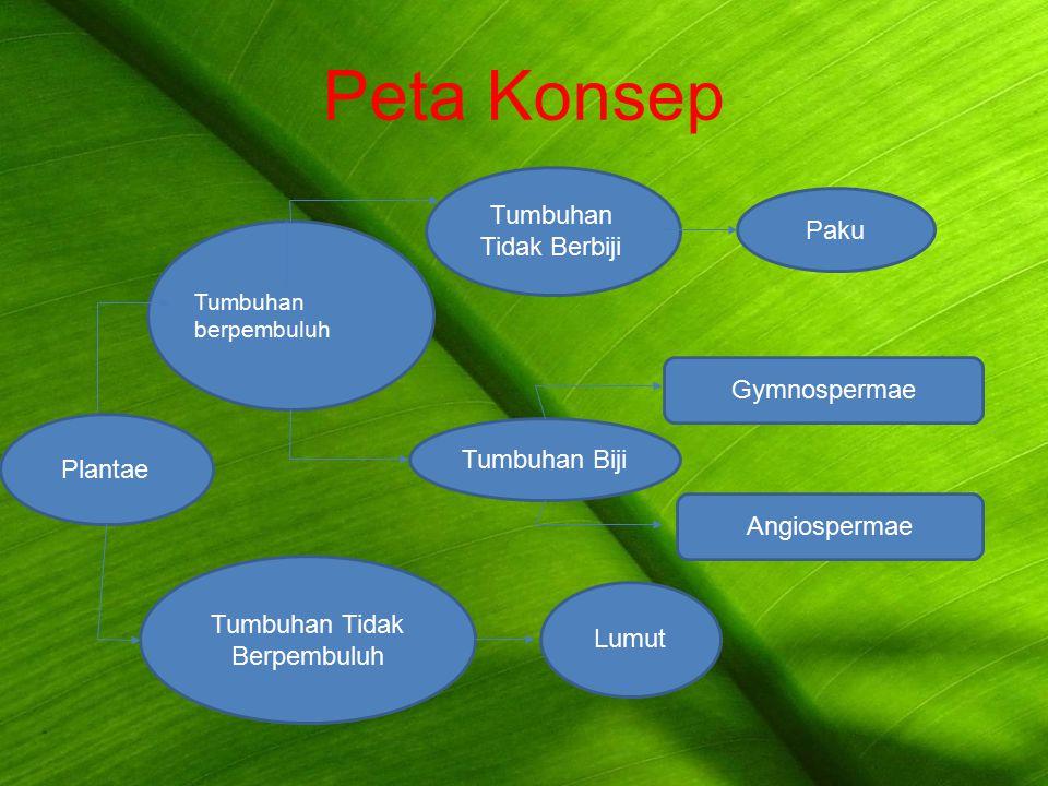 Peta Konsep Tumbuhan berpembuluh Plantae Tumbuhan Tidak Berpembuluh Lumut GymnospermaeAngiospermae Tumbuhan Tidak Berbiji Tumbuhan Biji Paku