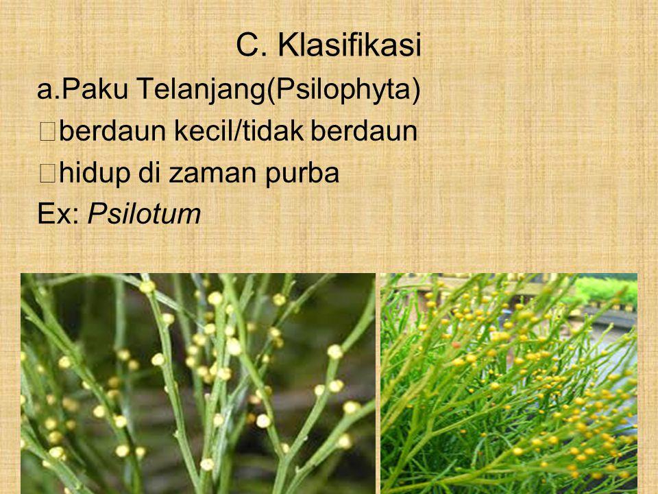C. Klasifikasi a.Paku Telanjang(Psilophyta)  berdaun kecil/tidak berdaun  hidup di zaman purba Ex: Psilotum