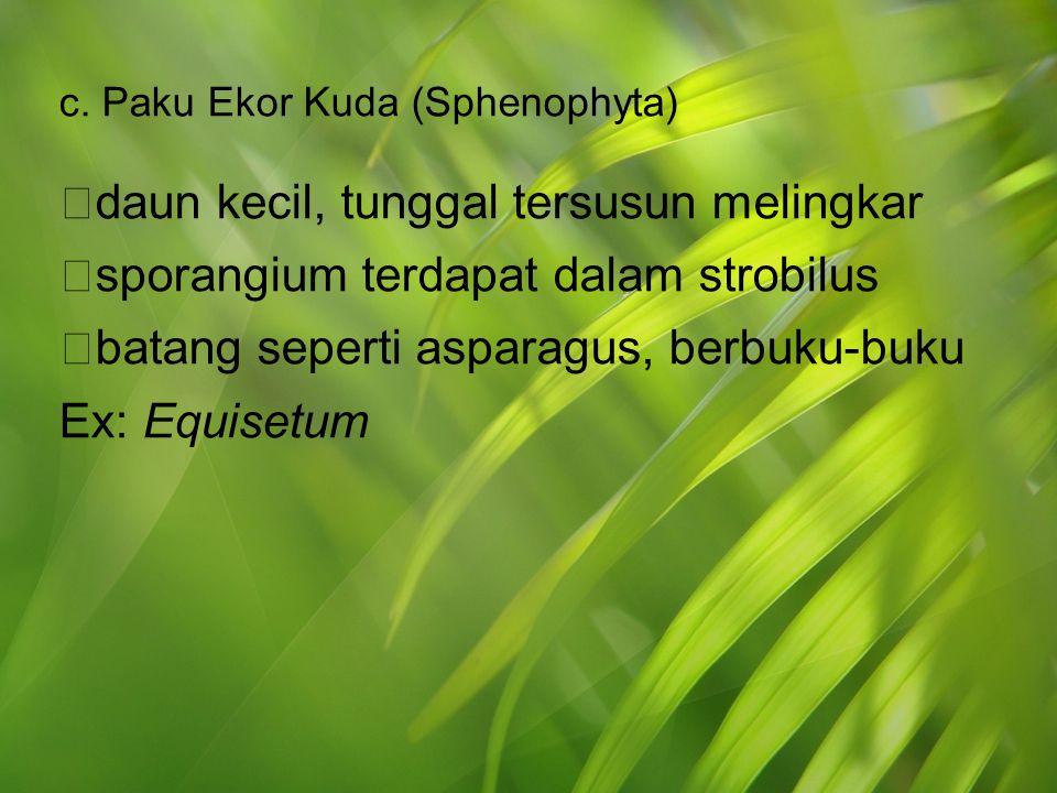 c. Paku Ekor Kuda (Sphenophyta)  daun kecil, tunggal tersusun melingkar  sporangium terdapat dalam strobilus  batang seperti asparagus, berbuku-buk