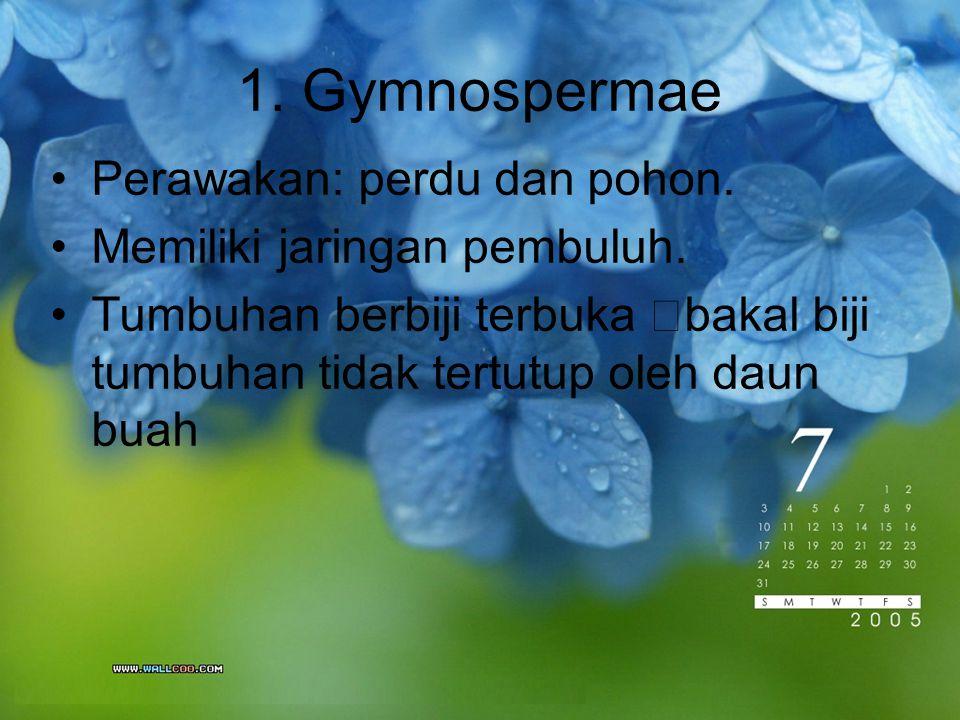 1. Gymnospermae Perawakan: perdu dan pohon. Memiliki jaringan pembuluh. Tumbuhan berbiji terbuka  bakal biji tumbuhan tidak tertutup oleh daun buah