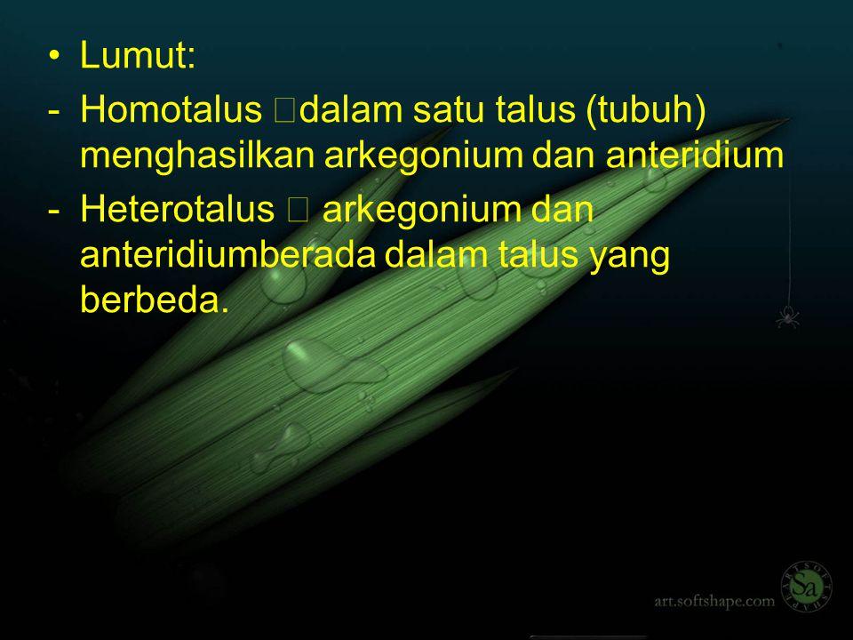TUMBUHAN PAKU