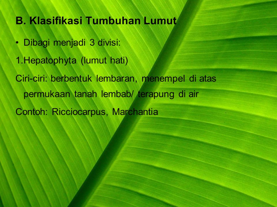 Question A.Jelaskan ciri-ciri tumbuhan paku. B.