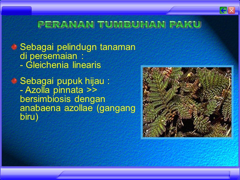 Sebagai tanaman hiasan : - Platycerium nidus (paku tanduk rusa) - Asplenium nidus (paku sarang burung) - Adiantum cuneatum (suplir) - Selaginella wildenowii (paku rane) Sebagai bahan penghasil obat-obatan : - Asipidium filix-mas - Lycopodium clavatum Sebagai sayuran : - Marsilea crenata (semanggi) - Salvinia natans (paku sampan = kiambang)