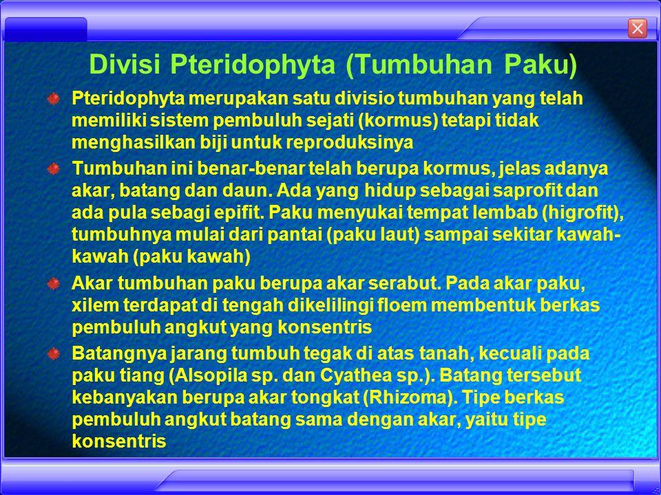 DIFINISIMORFOLOGIKLASIFIKASIGAMBARSIKLUSSPORAMANFAAT