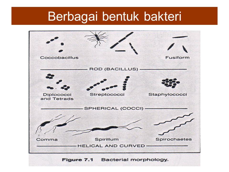 Genus-genus kapang