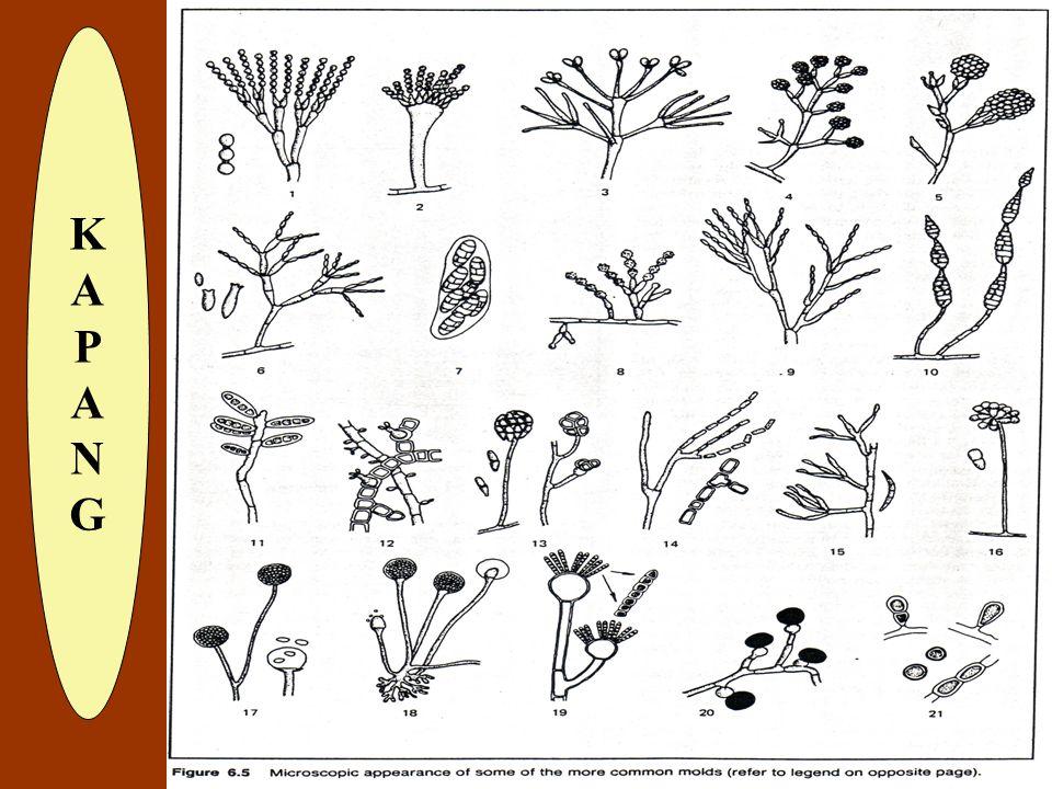 TIPE ORGANISMEPERSENTASE Fungi Cladosporium80 % Alternaria5 % Penicillium2 % Lain :13 % Aspergillus, Chaetomium, Dermatium, Fumago Fusarium, Helmintho