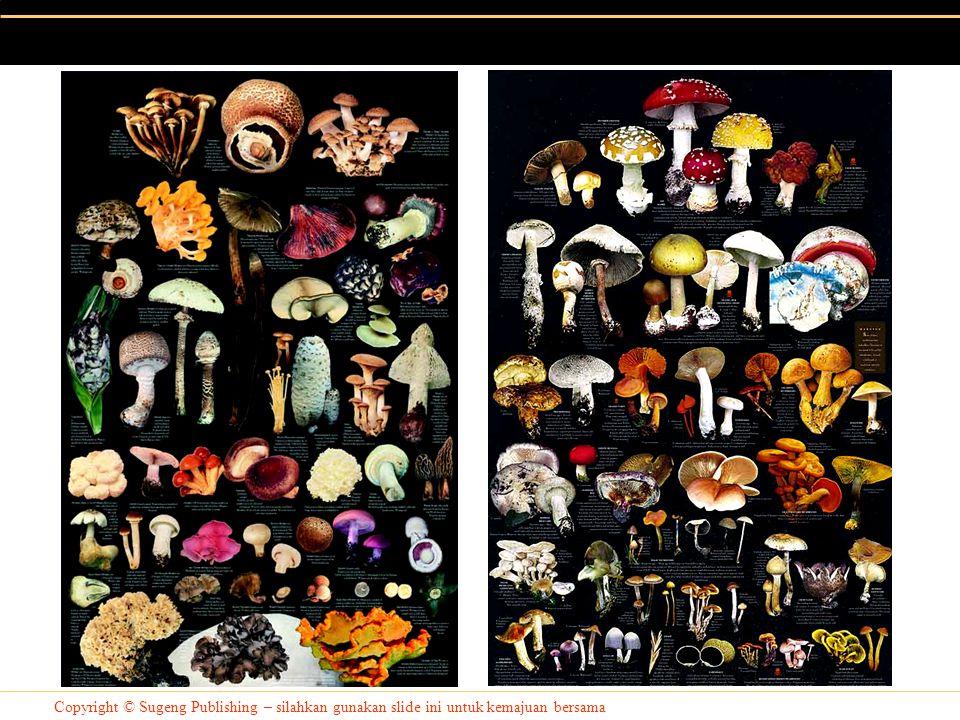 Copyright © Sugeng Publishing – silahkan gunakan slide ini untuk kemajuan bersama Simbiosis Fungi dengan Algae (Lichen) Fungi jenis tertentu dapat bersimbiosis dengan algae uniseluler membentuk lichen (lumut kerak).