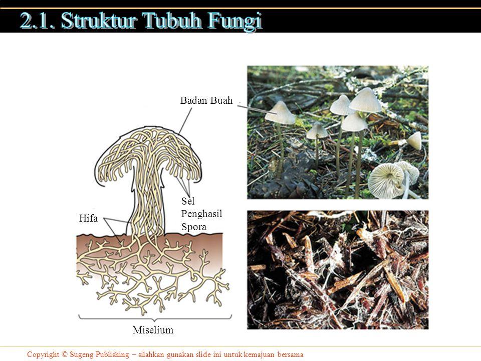 Copyright © Sugeng Publishing – silahkan gunakan slide ini untuk kemajuan bersama Anggota Fungi mendapatkan nutrisi melalui 3 cara : 1.