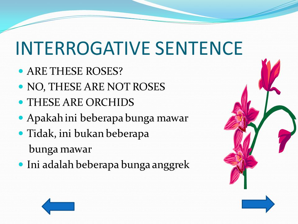 INTERROGATIVE SENTENCE ARE THESE ROSES? NO, THESE ARE NOT ROSES THESE ARE ORCHIDS Apakah ini beberapa bunga mawar Tidak, ini bukan beberapa bunga mawa