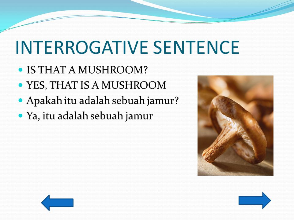 INTERROGATIVE SENTENCE IS THAT A MUSHROOM? YES, THAT IS A MUSHROOM Apakah itu adalah sebuah jamur? Ya, itu adalah sebuah jamur