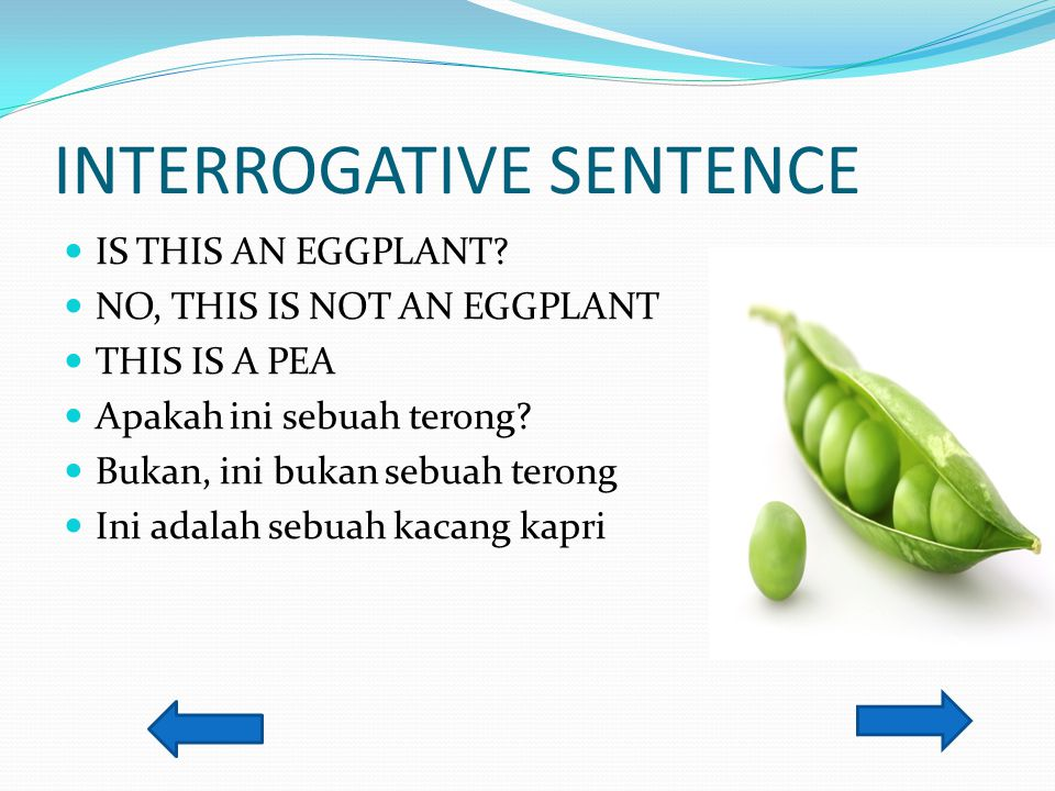 INTERROGATIVE SENTENCE IS THIS AN EGGPLANT? NO, THIS IS NOT AN EGGPLANT THIS IS A PEA Apakah ini sebuah terong? Bukan, ini bukan sebuah terong Ini ada