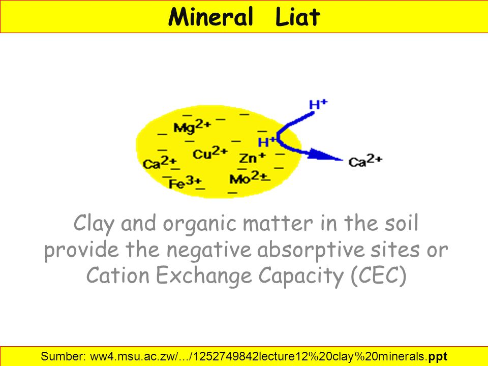 Mineral Liat Clay and organic matter in the soil provide the negative absorptive sites or Cation Exchange Capacity (CEC) Sumber: ww4.msu.ac.zw/.../125