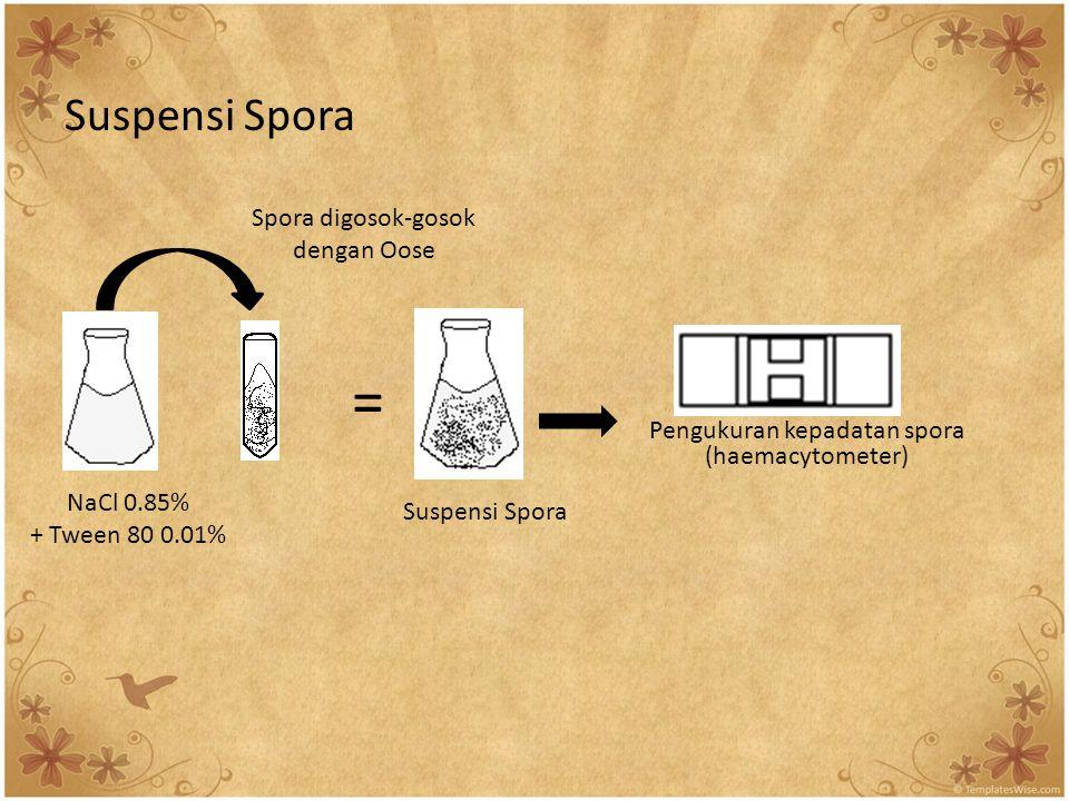 Suspensi Spora Pengukuran kepadatan spora (haemacytometer) = NaCl 0.85% + Tween 80 0.01% Spora digosok-gosok dengan Oose Suspensi Spora