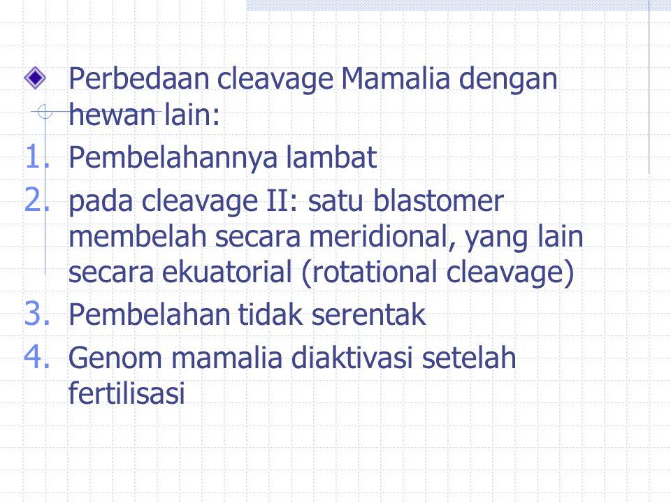 Perbedaan cleavage Mamalia dengan hewan lain: 1. Pembelahannya lambat 2. pada cleavage II: satu blastomer membelah secara meridional, yang lain secara