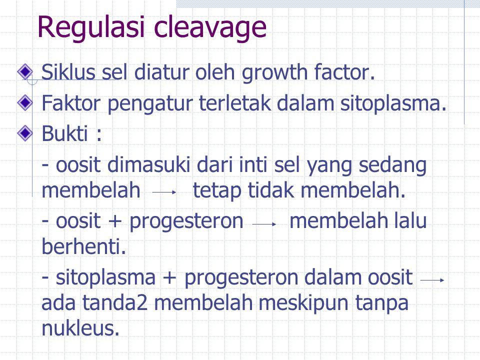 Regulasi cleavage Siklus sel diatur oleh growth factor. Faktor pengatur terletak dalam sitoplasma. Bukti : - oosit dimasuki dari inti sel yang sedang