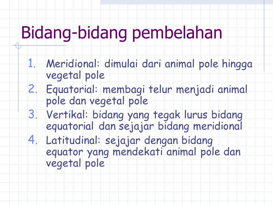 Bidang-bidang pembelahan 1. Meridional: dimulai dari animal pole hingga vegetal pole 2. Equatorial: membagi telur menjadi animal pole dan vegetal pole