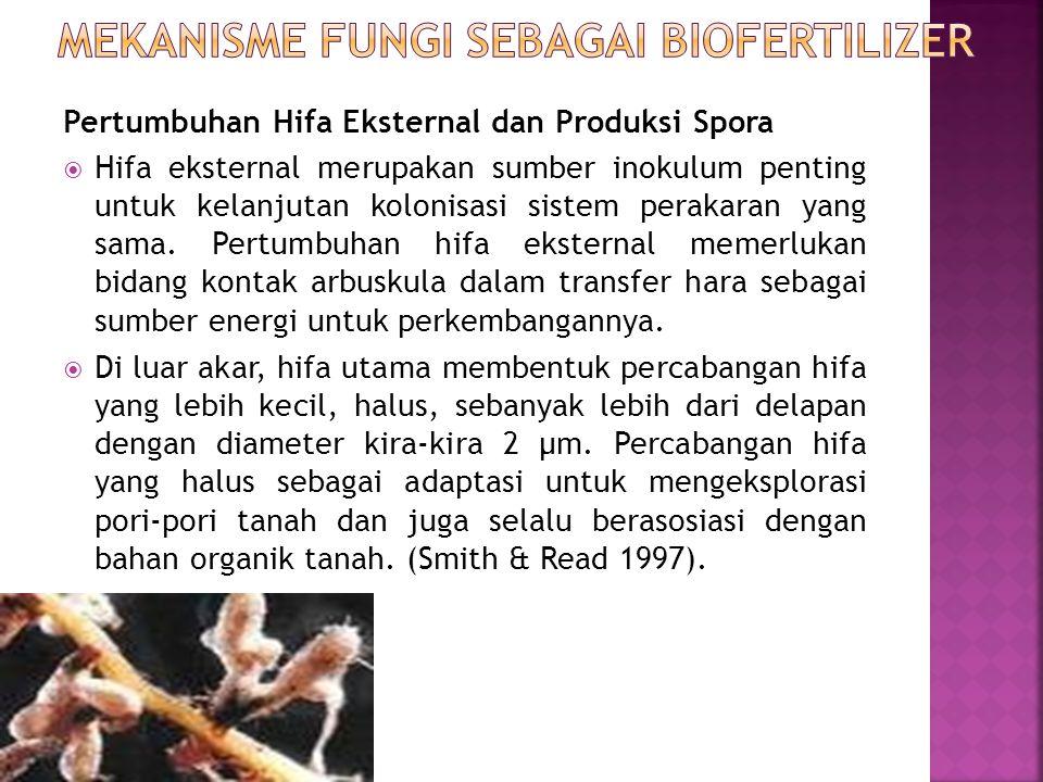 Pertumbuhan Hifa Eksternal dan Produksi Spora  Hifa eksternal merupakan sumber inokulum penting untuk kelanjutan kolonisasi sistem perakaran yang sam