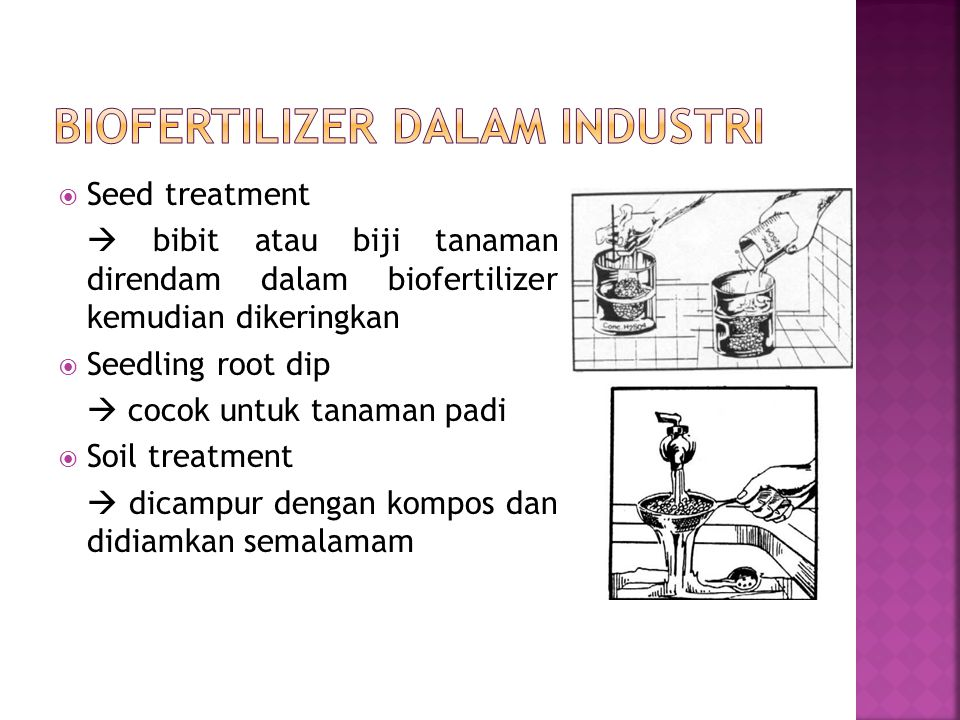  Seed treatment  bibit atau biji tanaman direndam dalam biofertilizer kemudian dikeringkan  Seedling root dip  cocok untuk tanaman padi  Soil tre