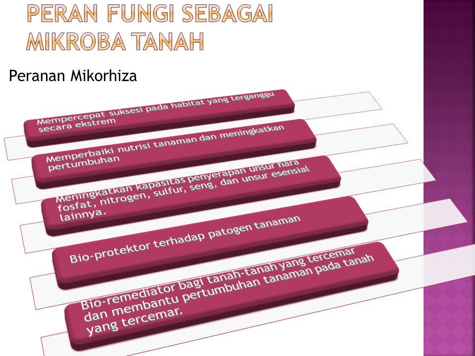 Peranan Mikorhiza