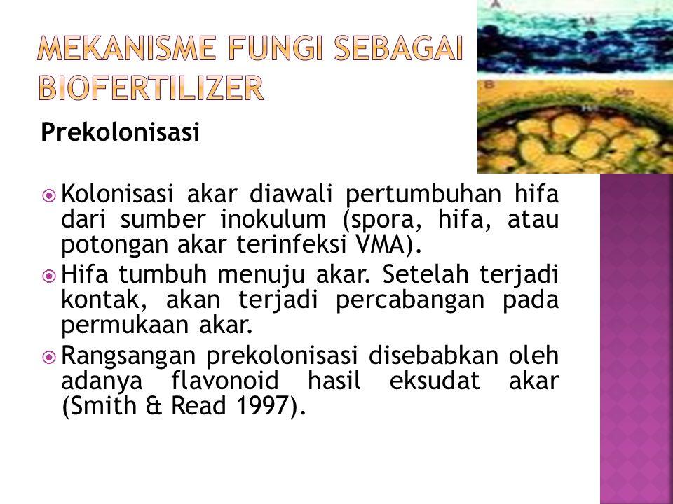Prekolonisasi  Kolonisasi akar diawali pertumbuhan hifa dari sumber inokulum (spora, hifa, atau potongan akar terinfeksi VMA).  Hifa tumbuh menuju a