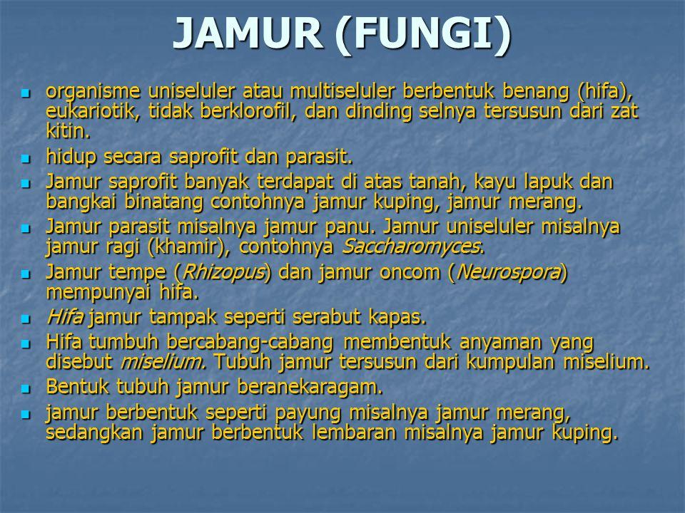 JAMUR (FUNGI) organisme uniseluler atau multiseluler berbentuk benang (hifa), eukariotik, tidak berklorofil, dan dinding selnya tersusun dari zat kiti