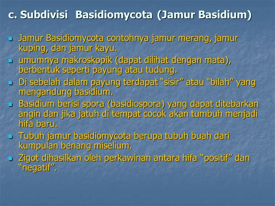 c. Subdivisi Basidiomycota (Jamur Basidium) Jamur Basidiomycota contohnya jamur merang, jamur kuping, dan jamur kayu. Jamur Basidiomycota contohnya ja