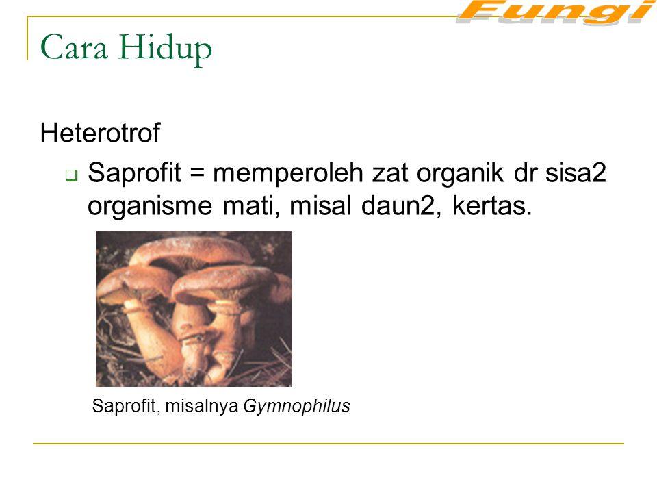 Cara Hidup Heterotrof  Saprofit = memperoleh zat organik dr sisa2 organisme mati, misal daun2, kertas. Saprofit, misalnya Gymnophilus