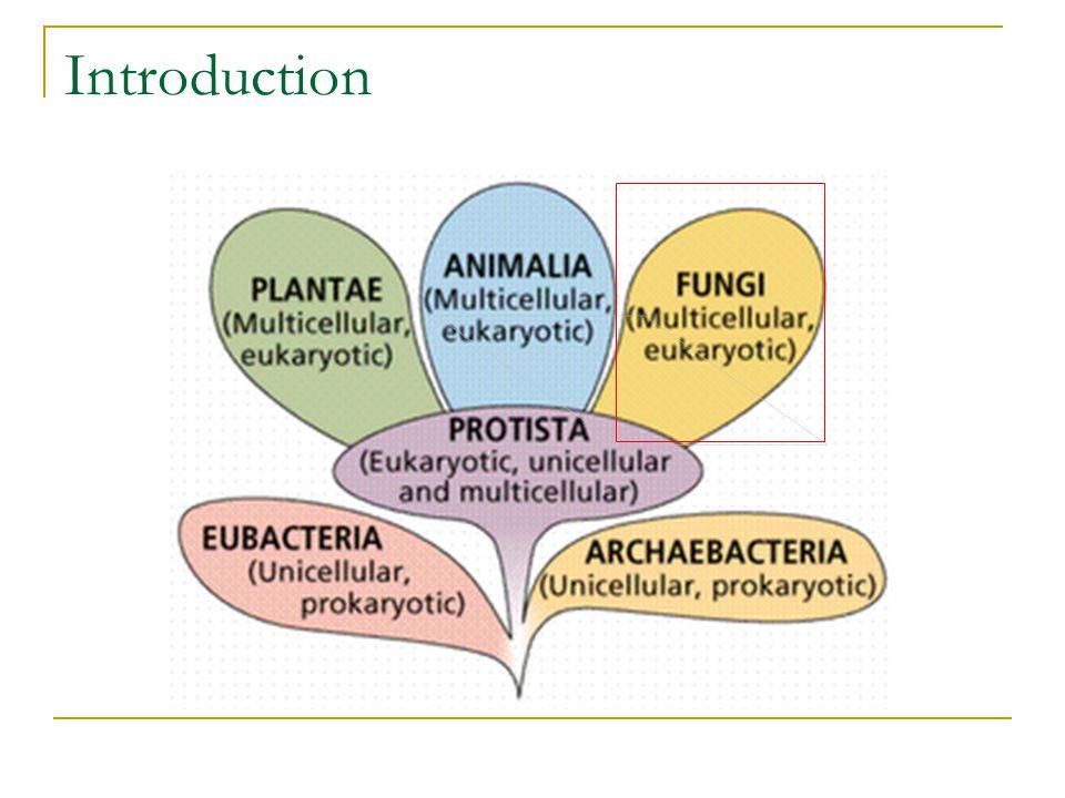 Askus dengan 8 askospora Jenis jantan Jenis betina Askogonium Trikogin Anteredium Inti haploid jantan Berpindah ke dalam askogonium Hifa dikariotik (n + n) berkembang dari askogonium Askokarp terdiri dari hifa dikariotik (n + n) dan hifa steril (n) Nukleus diploid (2n) Askus muda Meiosis Tiap inti haploid membelah sekali dengan mitosis Reproduksi seksual pada Ascomycota