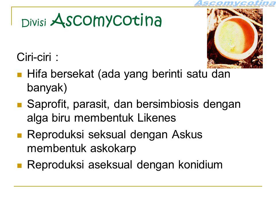 Divisi Ascomycotina Ciri-ciri : Hifa bersekat (ada yang berinti satu dan banyak) Saprofit, parasit, dan bersimbiosis dengan alga biru membentuk Likenes Reproduksi seksual dengan Askus membentuk askokarp Reproduksi aseksual dengan konidium