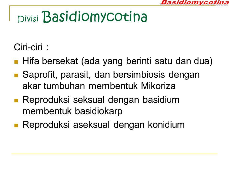Divisi Basidiomycotina Ciri-ciri : Hifa bersekat (ada yang berinti satu dan dua) Saprofit, parasit, dan bersimbiosis dengan akar tumbuhan membentuk Mikoriza Reproduksi seksual dengan basidium membentuk basidiokarp Reproduksi aseksual dengan konidium