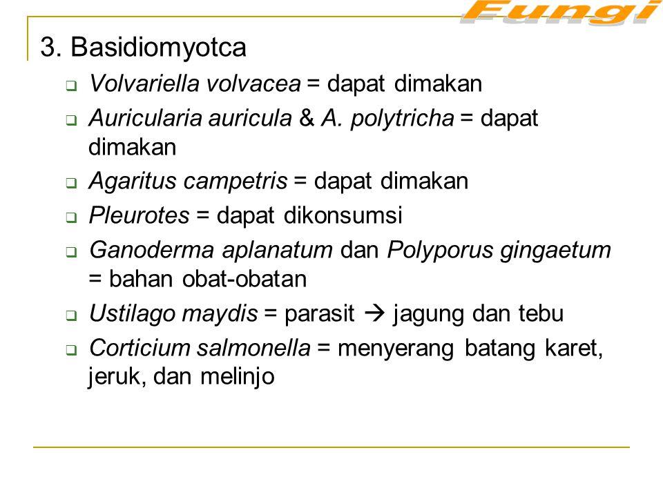 3. Basidiomyotca  Volvariella volvacea = dapat dimakan  Auricularia auricula & A. polytricha = dapat dimakan  Agaritus campetris = dapat dimakan 