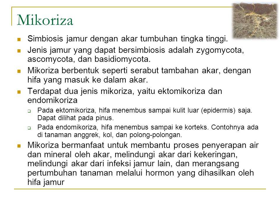 Mikoriza Simbiosis jamur dengan akar tumbuhan tingka tinggi. Jenis jamur yang dapat bersimbiosis adalah zygomycota, ascomycota, dan basidiomycota. Mik