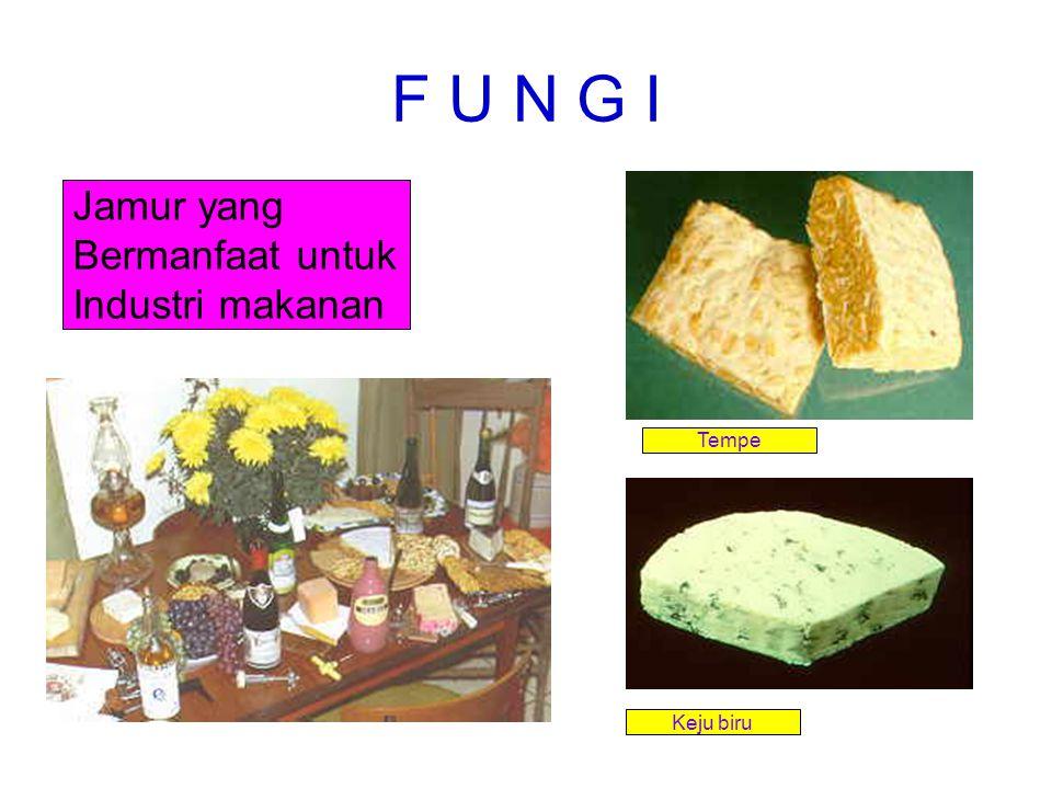 F U N G I Jamur yang Bermanfaat untuk Industri makanan Tempe Keju biru