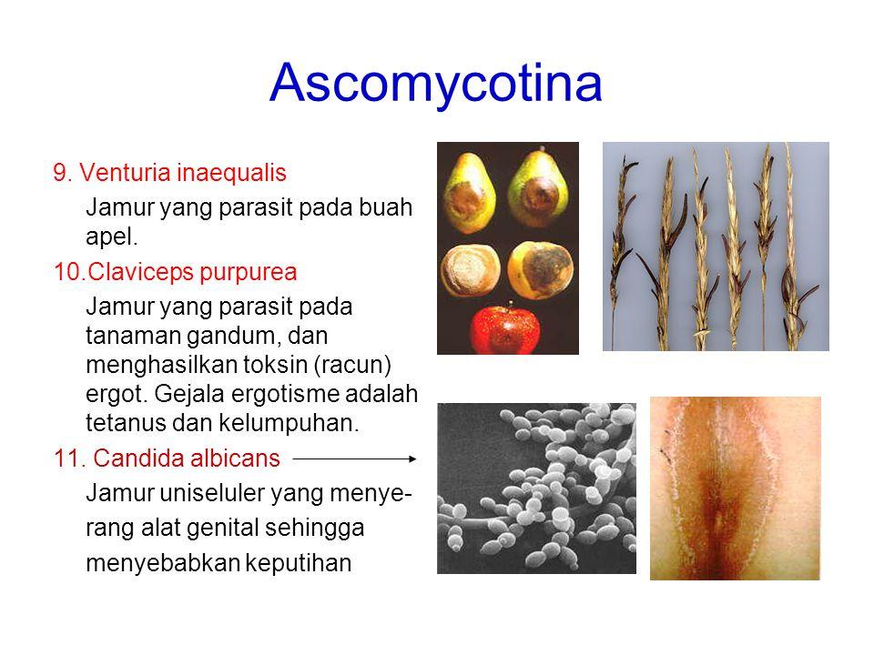 9. Venturia inaequalis Jamur yang parasit pada buah apel. 10.Claviceps purpurea Jamur yang parasit pada tanaman gandum, dan menghasilkan toksin (racun