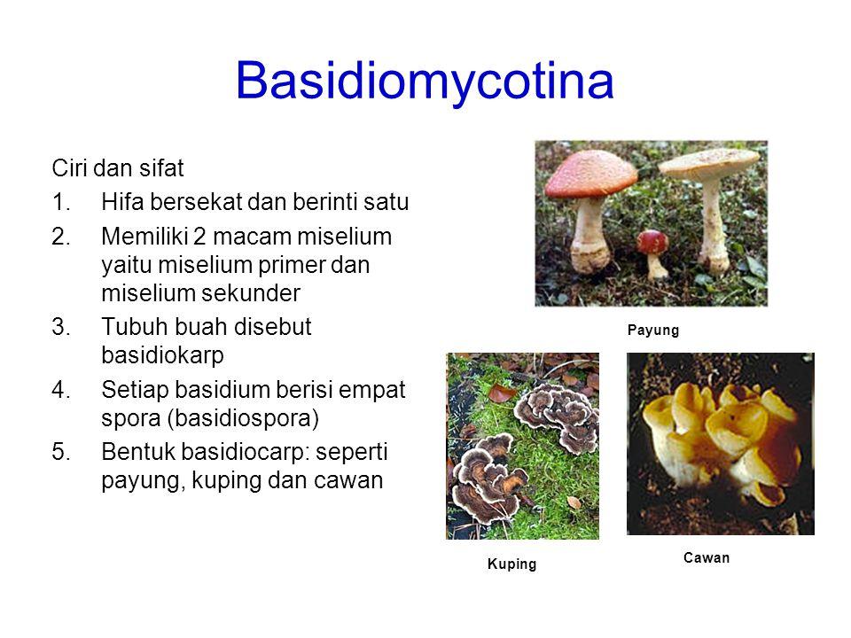 Basidiomycotina Ciri dan sifat 1.Hifa bersekat dan berinti satu 2.Memiliki 2 macam miselium yaitu miselium primer dan miselium sekunder 3.Tubuh buah d