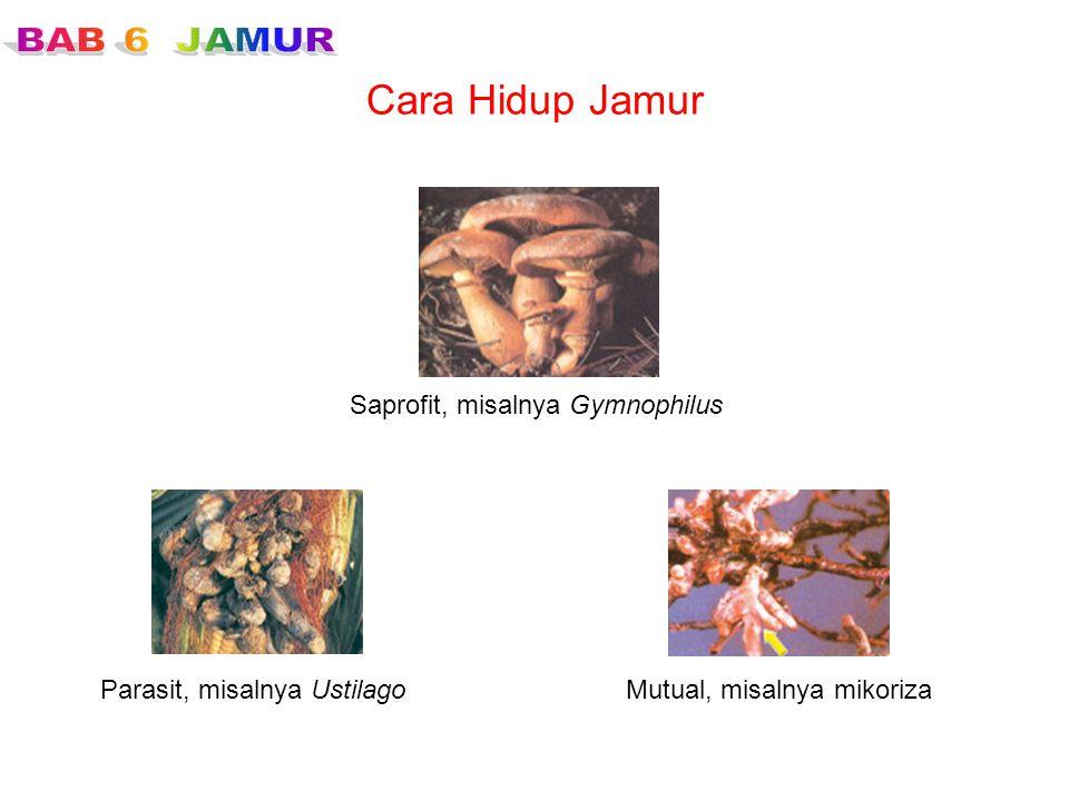 Cara Hidup Jamur Saprofit, misalnya Gymnophilus Parasit, misalnya UstilagoMutual, misalnya mikoriza