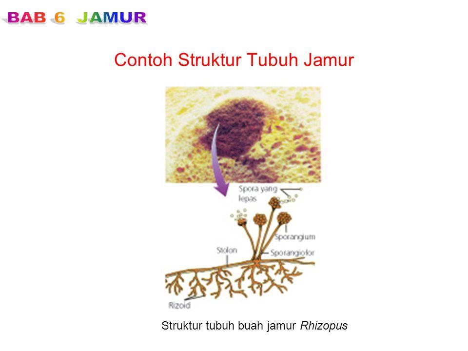 Contoh Struktur Tubuh Jamur Struktur tubuh buah jamur Rhizopus