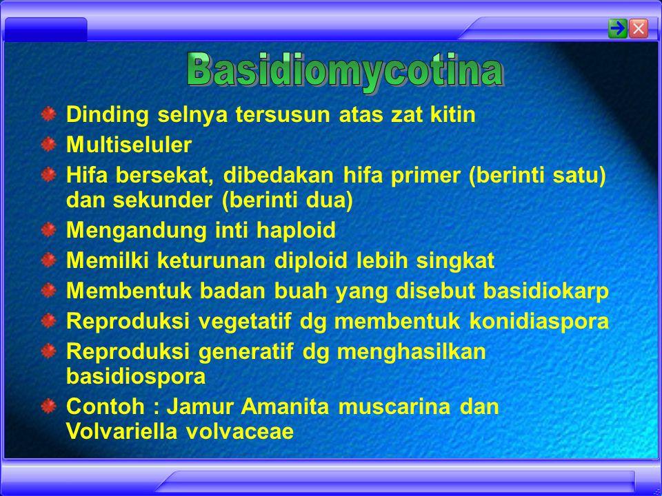 Morchella Powdery mildew Haustoria Ascus cup Ascocarp