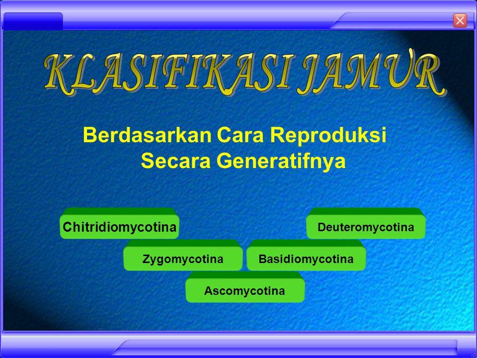 Kelompok organisme eukariotik Umumnya multiseluler (bersel banyak), ada juga yang uniseluler (bersel satu) Tidak berklorofil, sehingga heterotrof Tubuhnya terdiri dari benang-benang yang disebut hifa, hifa dapat membentuk anyaman bercabang- cabang yang disebut miselium Dinding selnya tersusun atas zat kitin Cadangan makanan tersimpan dalam bentuk glikogen dan protein Pencernaan berlangsung secara ektrakseluler Reproduksi jamur dapat secara seksual (generatif) dan aseksual (vegetatif)