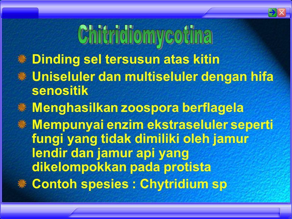 Berdasarkan Cara Reproduksi Secara Generatifnya Chitridiomycotina Zygomycotina Ascomycotina Basidiomycotina Deuteromycotina
