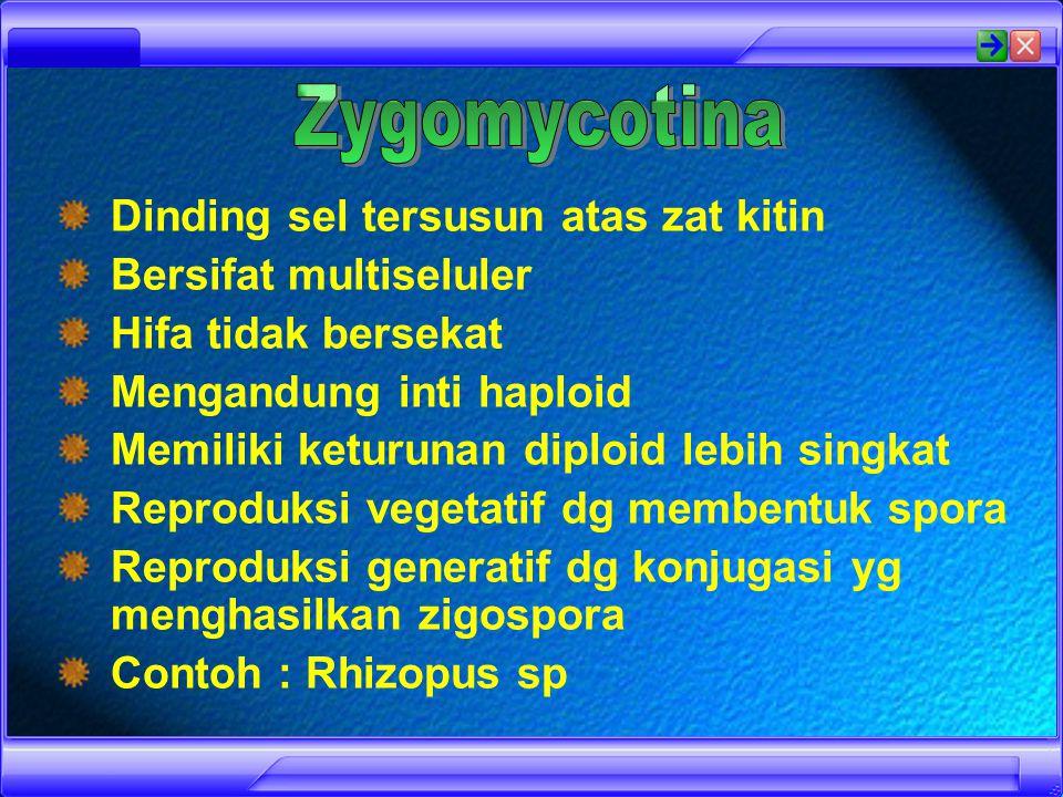 Chytreleasingzoospores chytridium confervae