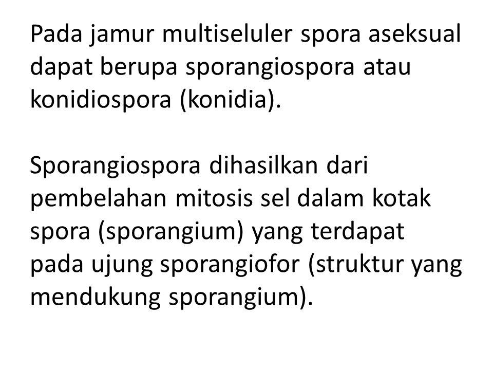 Pada jamur multiseluler spora aseksual dapat berupa sporangiospora atau konidiospora (konidia). Sporangiospora dihasilkan dari pembelahan mitosis sel