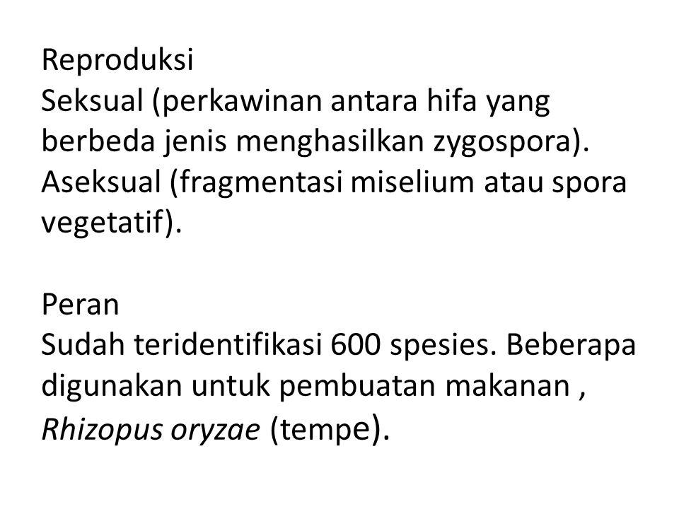 Reproduksi Seksual (perkawinan antara hifa yang berbeda jenis menghasilkan zygospora). Aseksual (fragmentasi miselium atau spora vegetatif). Peran Sud